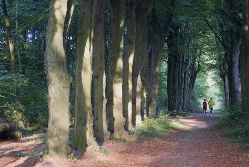 Course à pied dans le bois de Vincennes