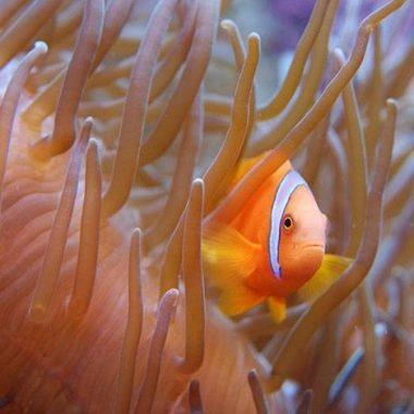Visite de l'aquarium tropical de la Porte Dorée