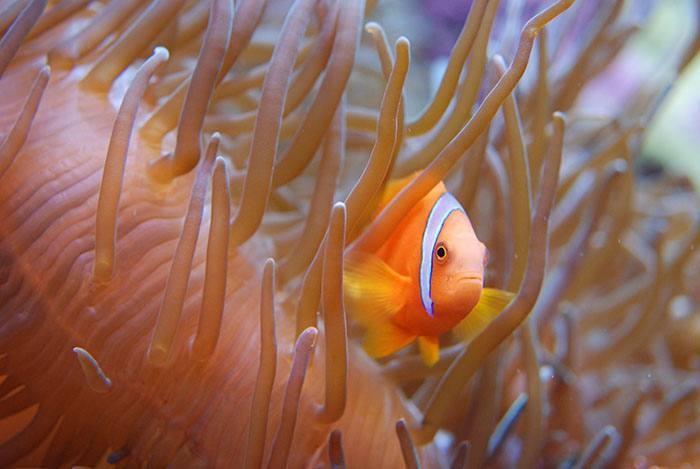 aquarium-tropical-paris