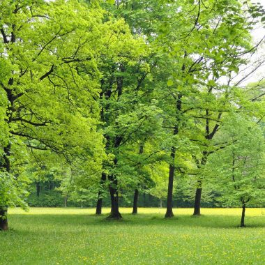 Parc départemental
