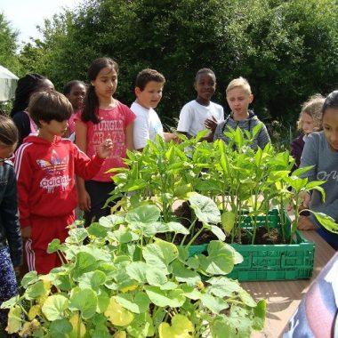 Jardin collectif agro-écologique