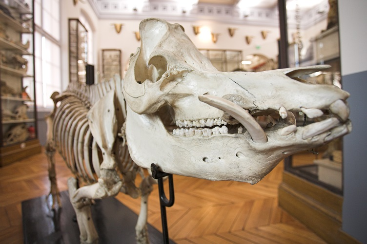 Visites du Musée Fragonard