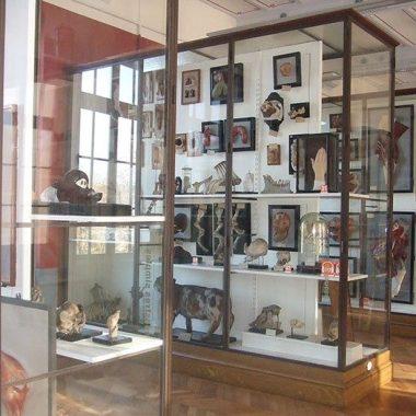 Visite du musée Fragonard de l'Ecole Vétérinaire (ENVA) suivie d'un goûter
