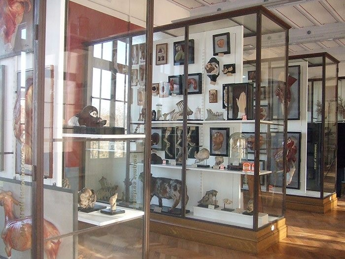 musee-fragonard-maisons-alfort-2