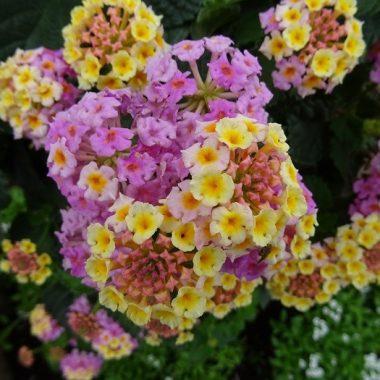 Parcours Floral dans le Val-de-Marne