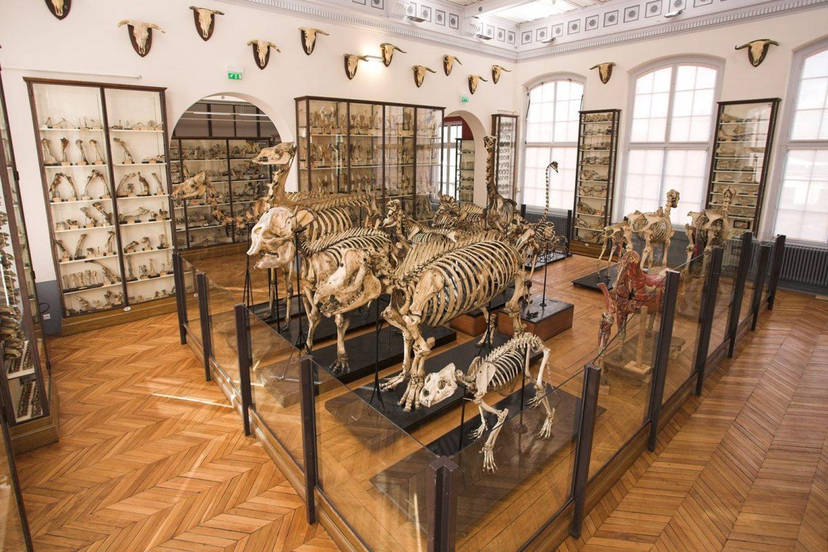 musee fragonard ecole veterinaire maisons alfort