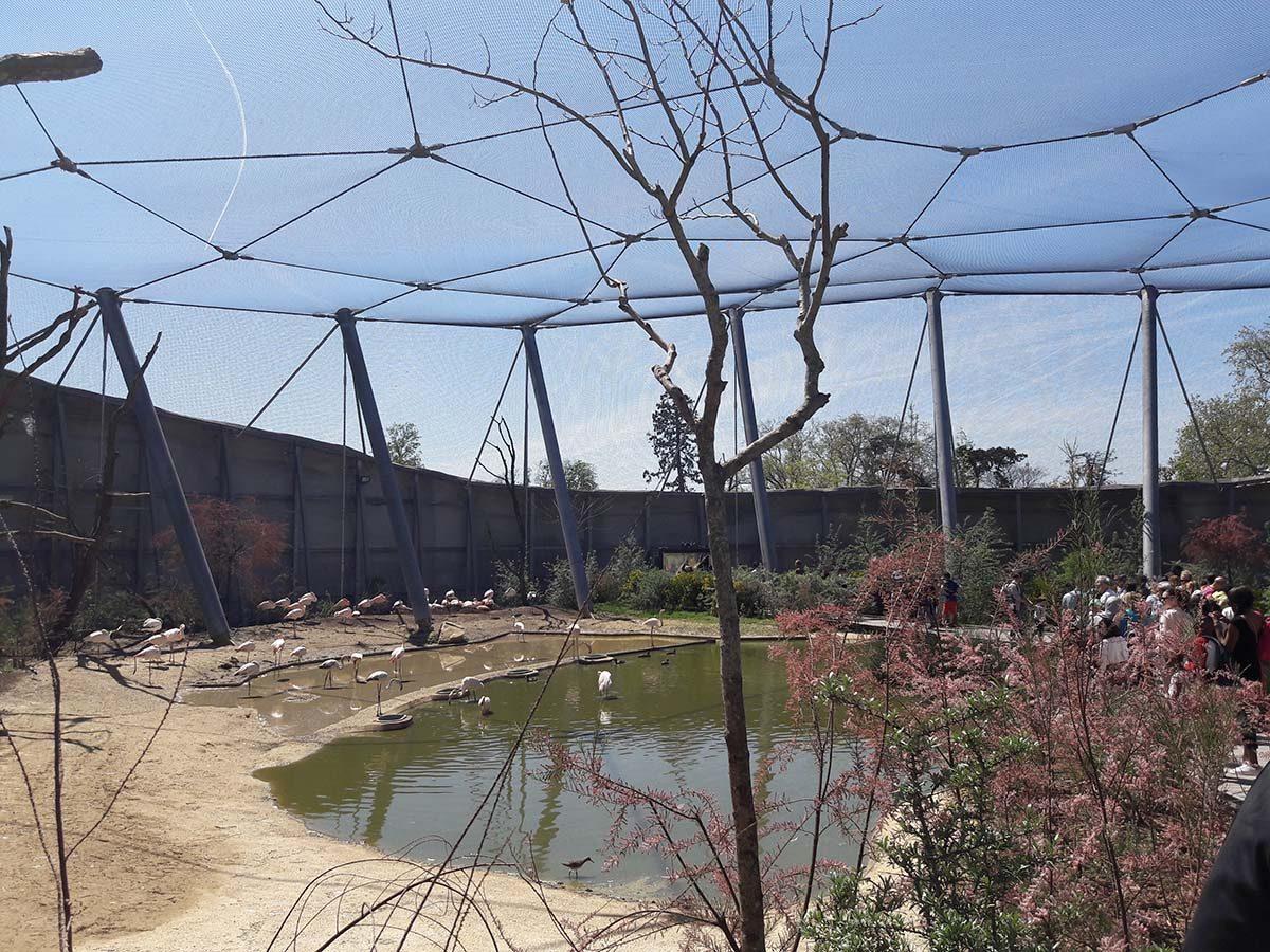visite zoo de vincennes