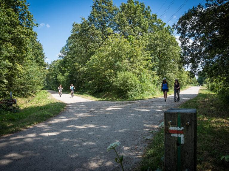 Randonnée en forêt Notre-Dame en Val-de-Marne
