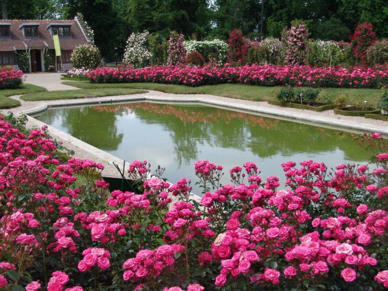 La roseraie du Val-de-Marne