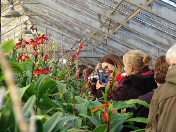 Les serres d'orchidées Vacherot & Lecoufle