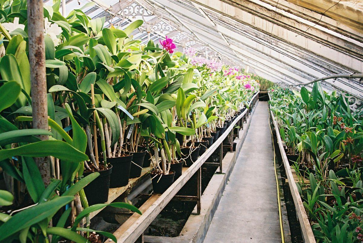 serre d'orchidées Vacherot & Lecoufle