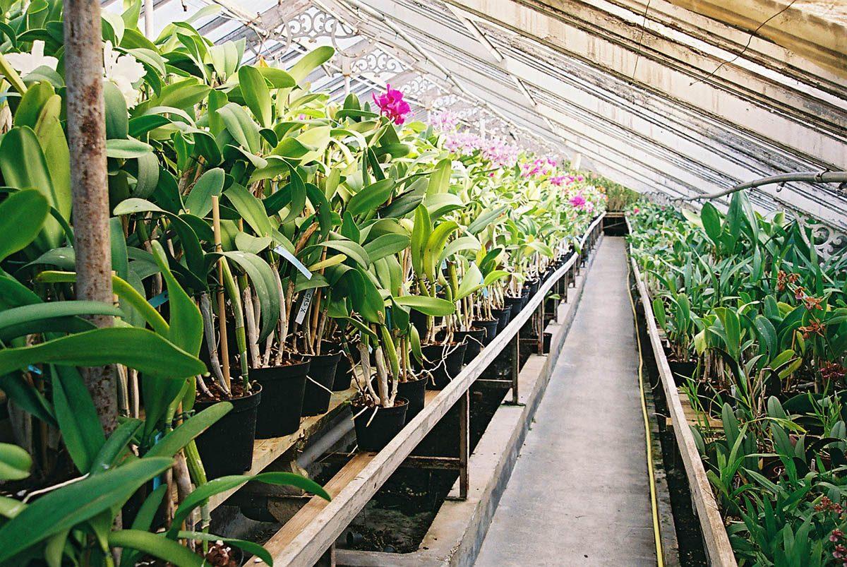 orchidées vacherot lecoufle boissy saint léger en val de marne