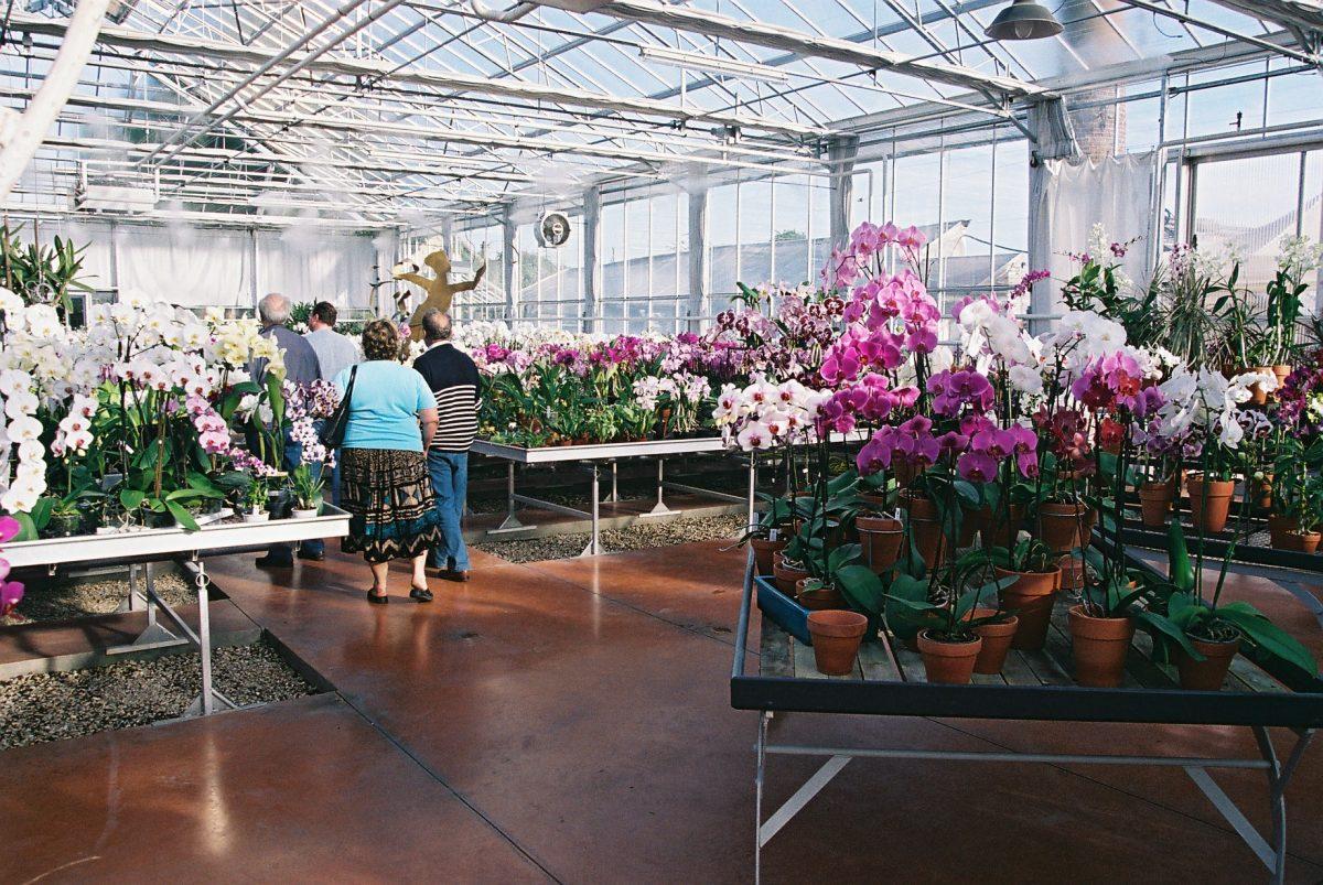 La serre d'orchidées Vacherot & Lecoufle