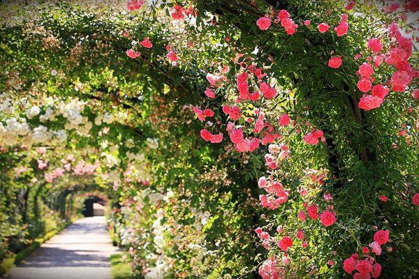 Arche de roses Roseraie du Val de marne