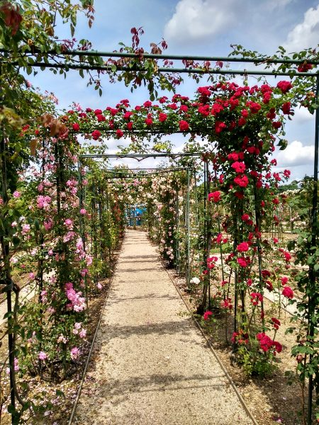 chemin roses roseraie val de marne