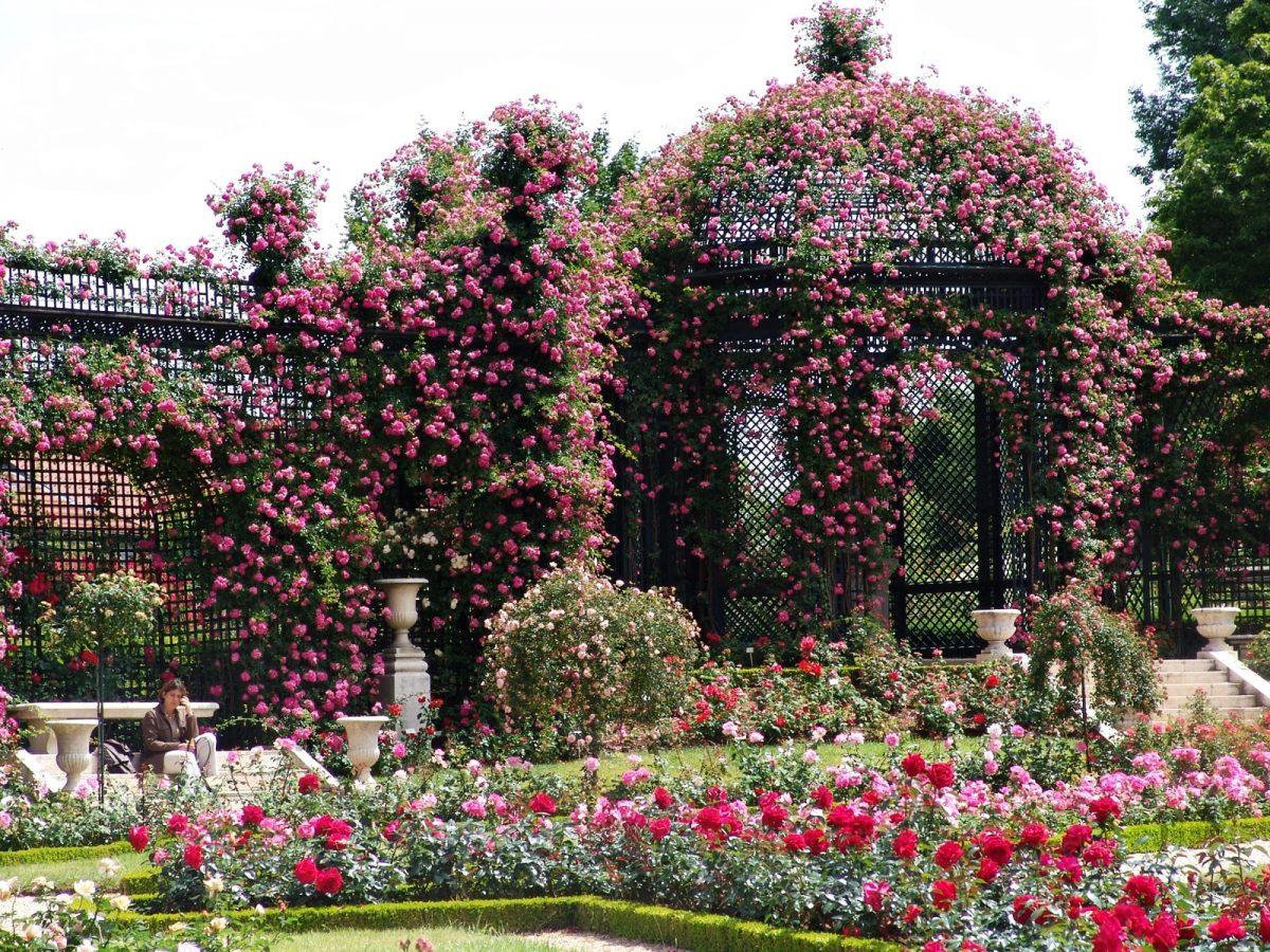 jardin roses roseraie val de marne