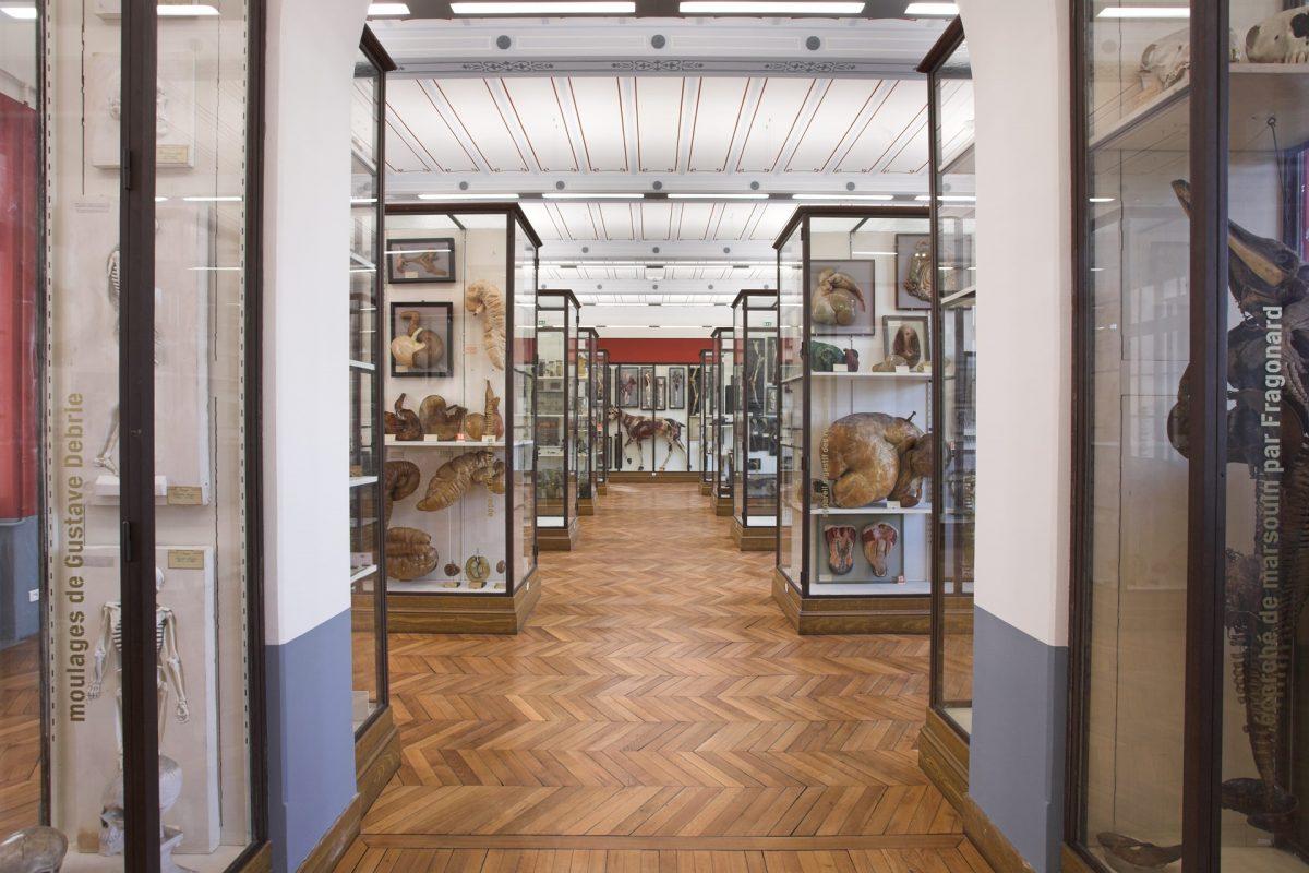 exposition musee fragonard ecole veterinaire