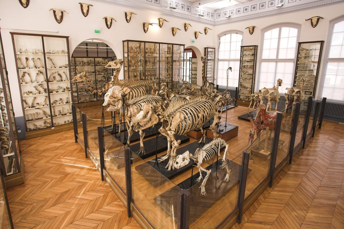 squelettes musee fragonard ecole veterinaire