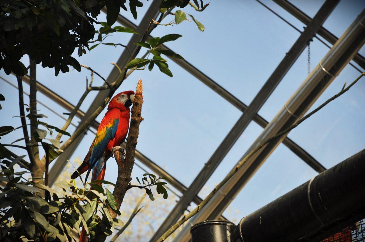 perroquet oiseau zoo vincennes parc zoologique paris