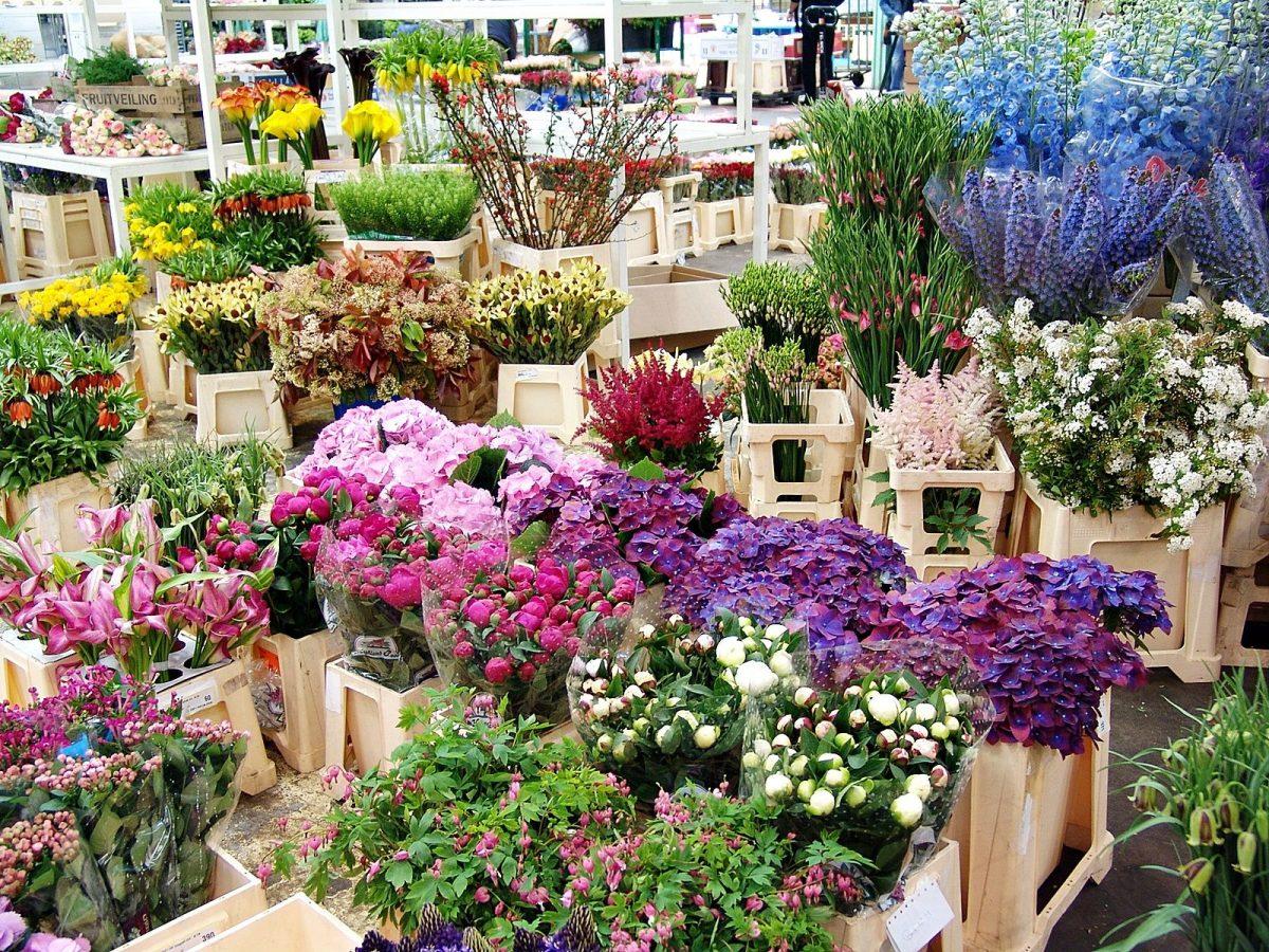 pavillon fleurs plantes marche rungis