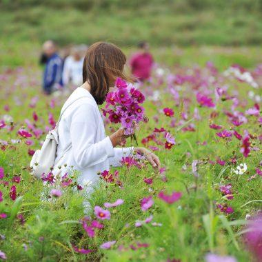 champ fleurs parc lilas vitry sur seine