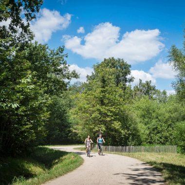 Bois & Forêts