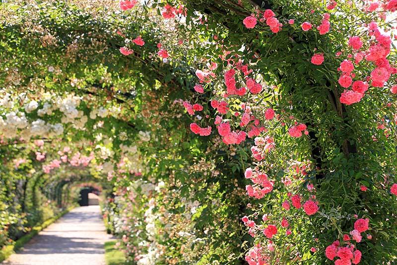 arche fleurs roseraie val de marne