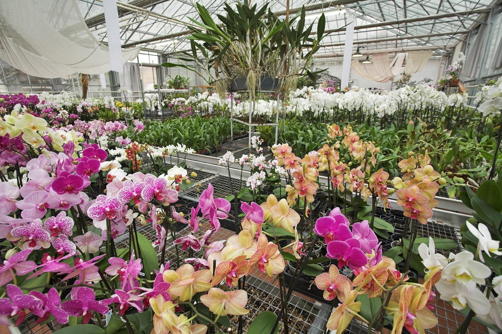 Comment S Occuper D Un Orchidée on a testé pour vous… la visite des serres d'orchidées