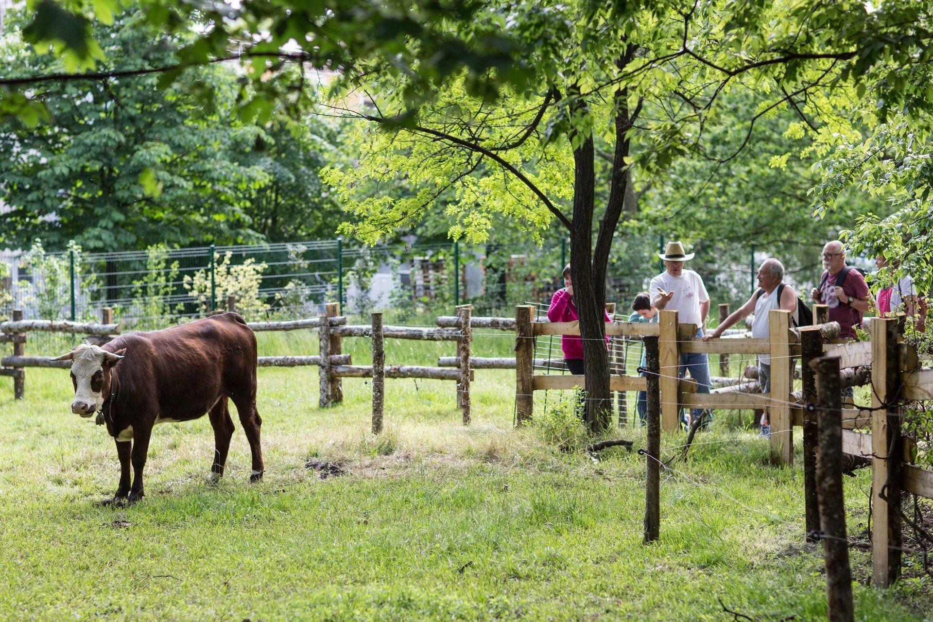 Que Faire A Maisons Alfort Val De Marne Tourisme Loisirs