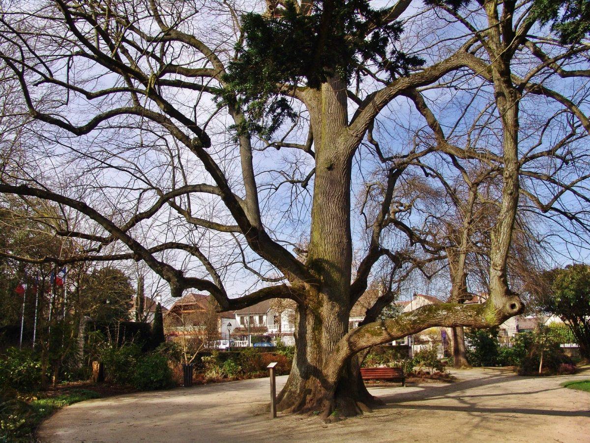 arbre parc rungis