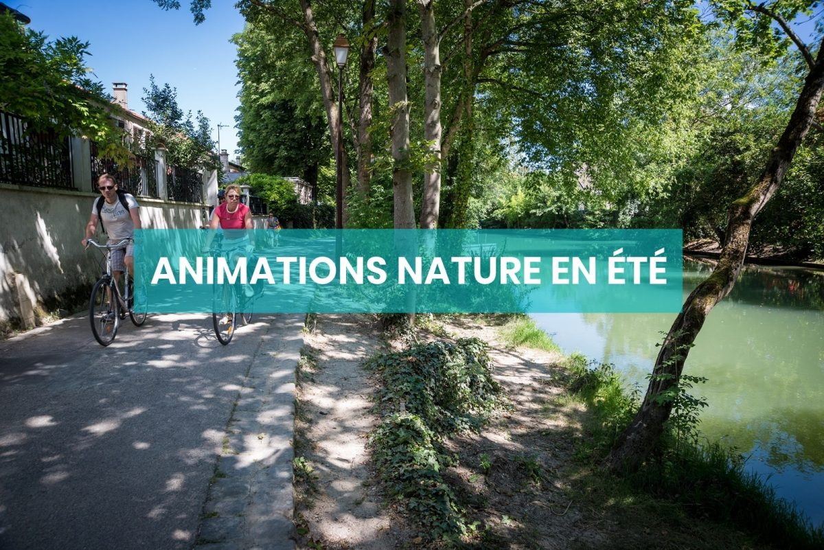 nav animations nature été