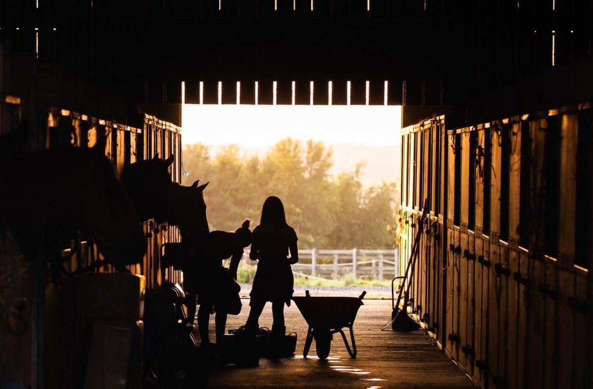 écurie chevaux équitation