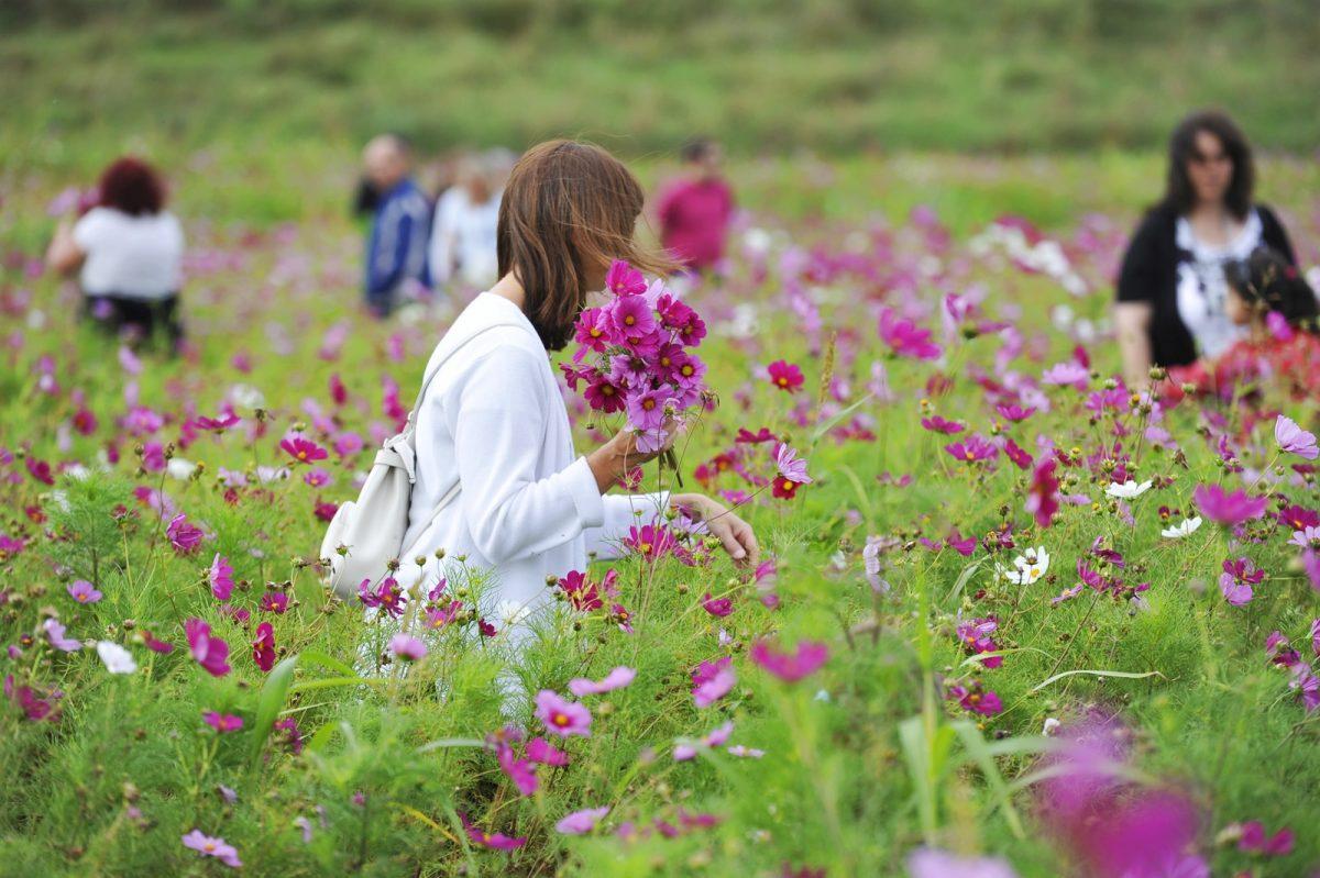 Fête des moissons au Parc des Lilas à Vitry-sur-Seine © Michel Aumercier