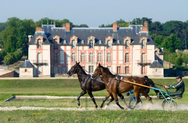 cheval_facade_chateau_grosbois_boissy_saint_leger-CR-DANIEL.THIERRY