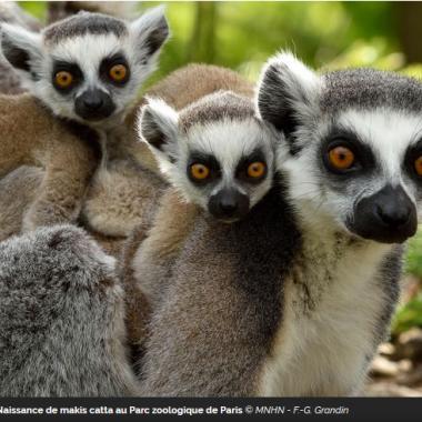 Déconfinement au Zoo de Vincennes