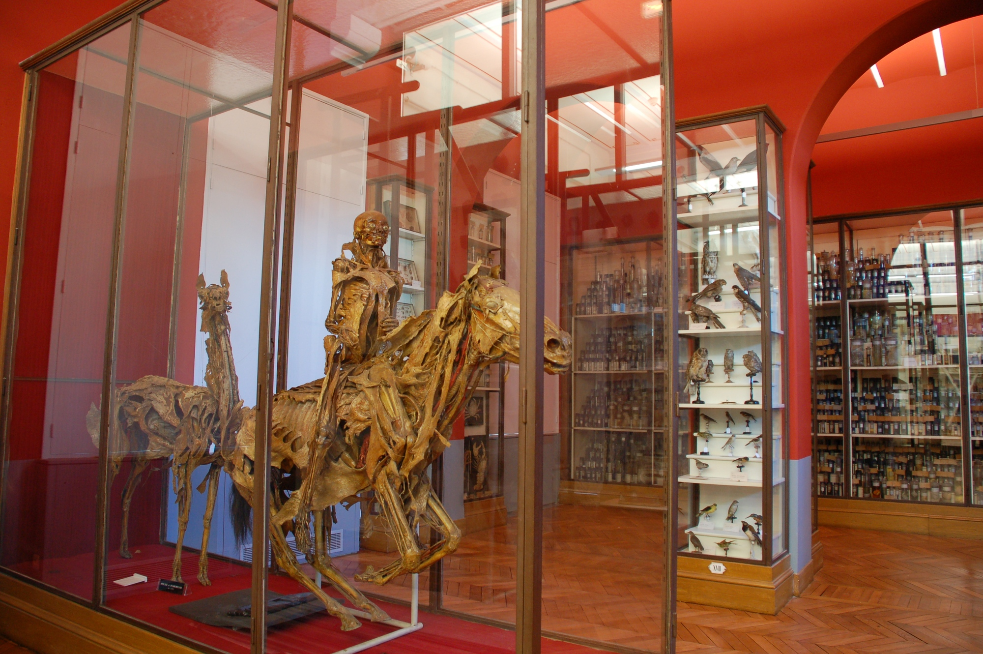 Musee-ecole-veterinaire–1–01