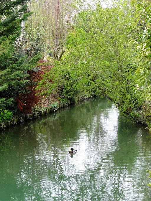 Sortie nature LPO : La Petite Venise du Val-de-Marne à Créteil