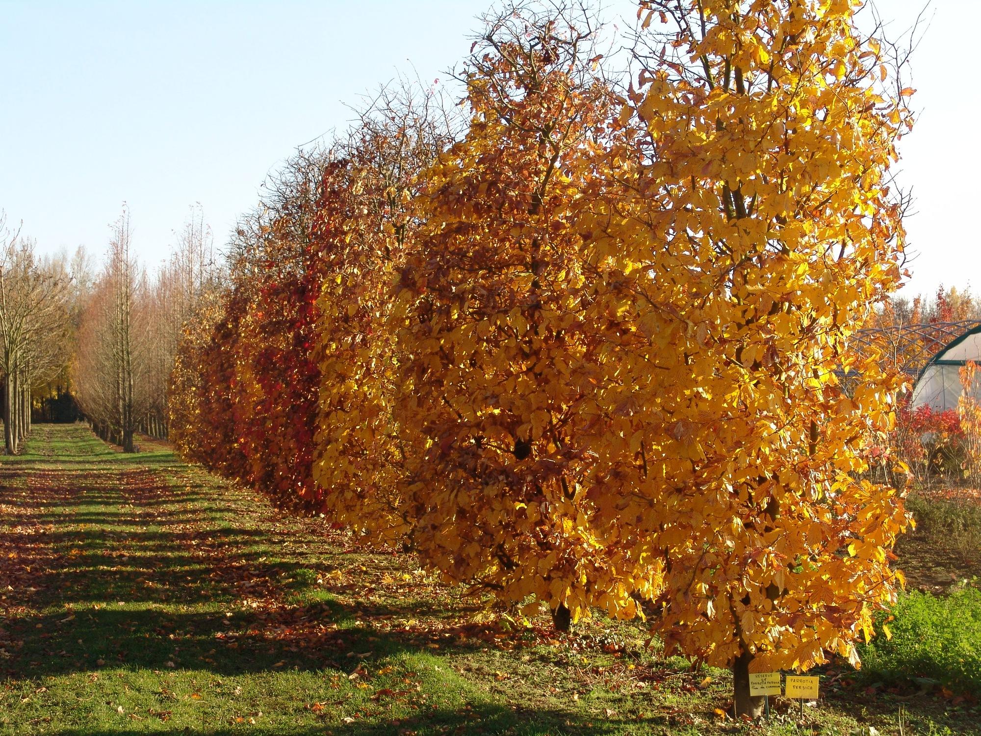 Plateau-briard-automne-01