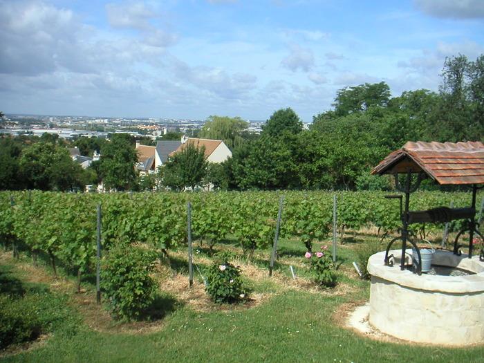 Vignes-de-sucy