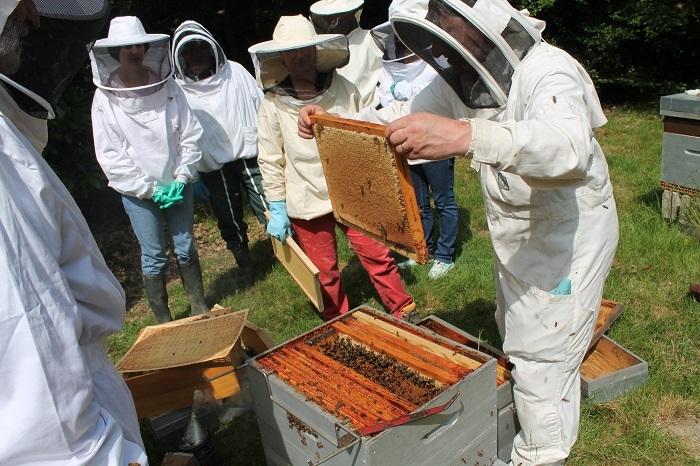abeilles-des-bordes-060-0