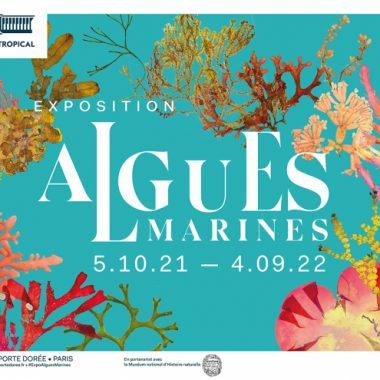 Exposition Algues Marines au Palais