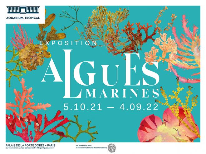 affiche-exposition-algues-marines-hz