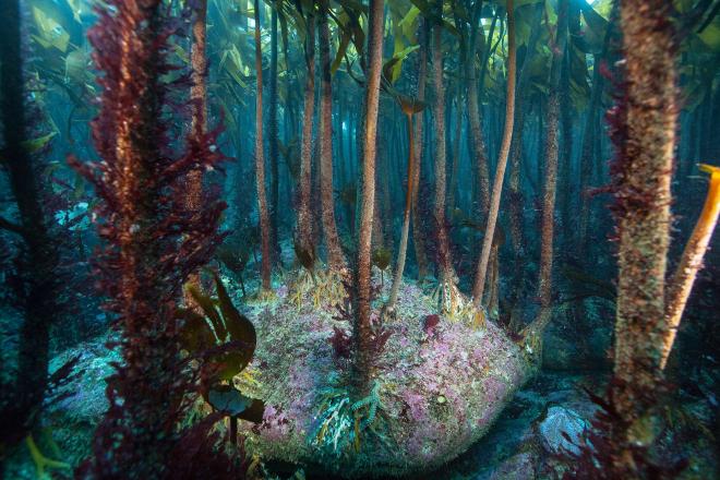 algues-marines-wthomas-1