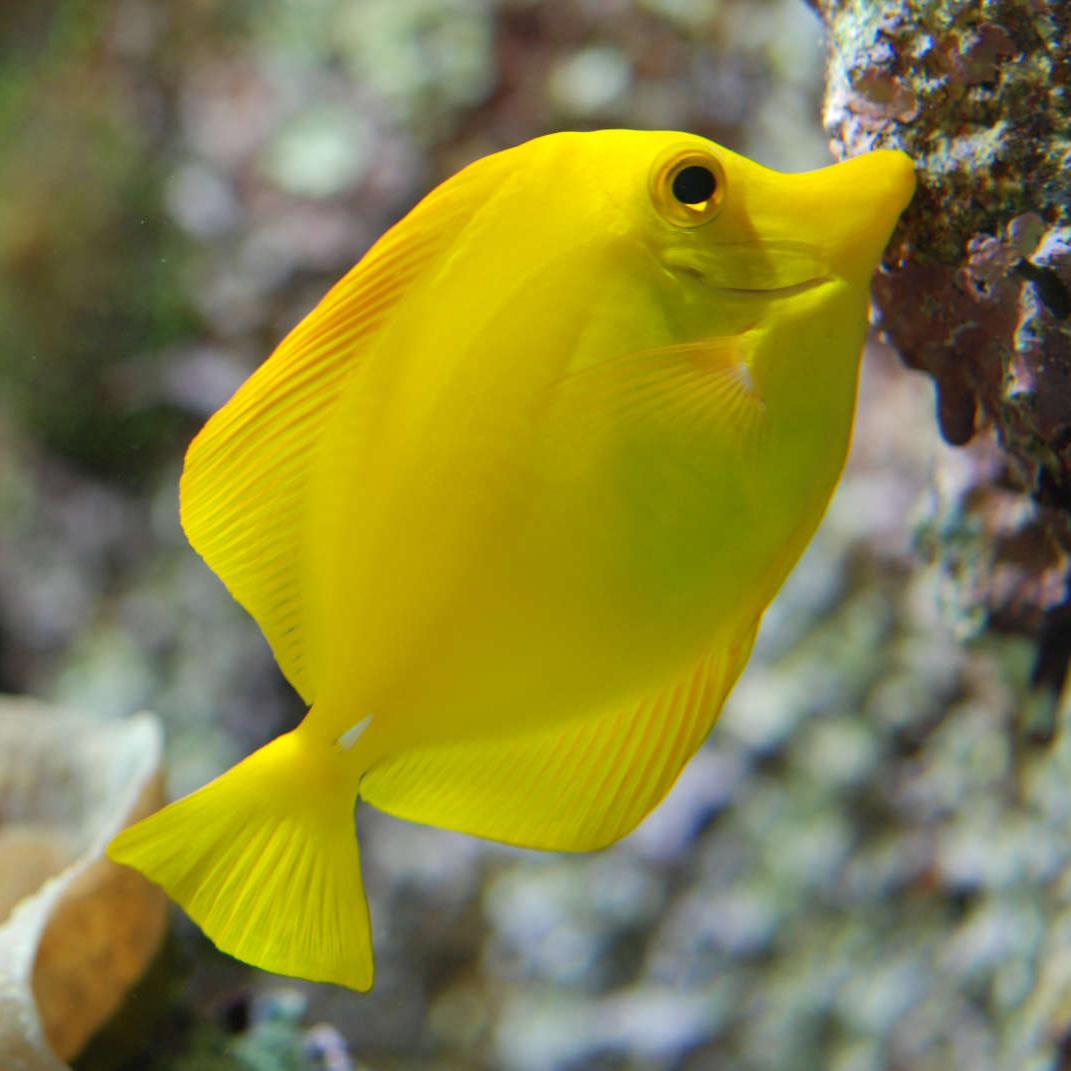 aquarium-c3d014416c764b599cc0450122a52cdb