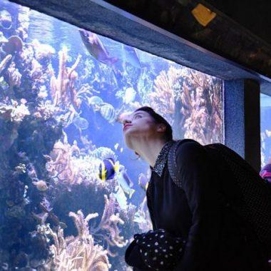L'Aquarium tropical du Palais de la Porte Dorée