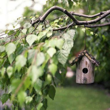 Tégéval – Construction de mangeoires à oiseaux