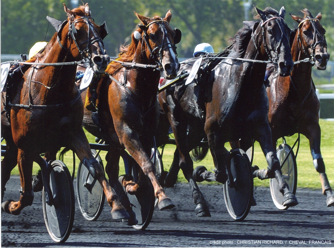 cheval-hippodrome-vincennes—1-
