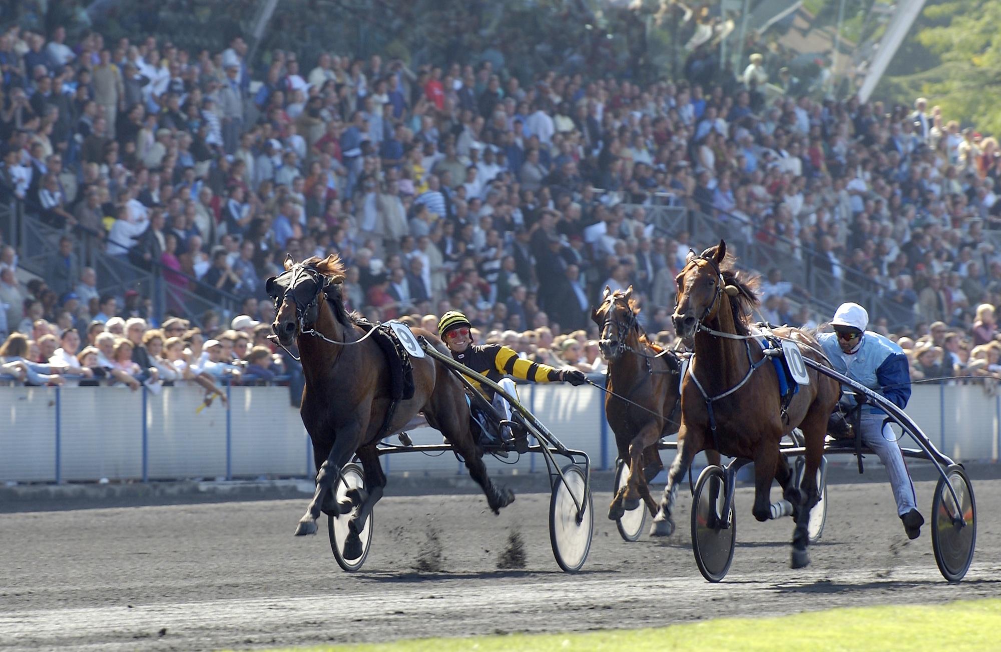 cheval-hippodrome-vincennes—2-