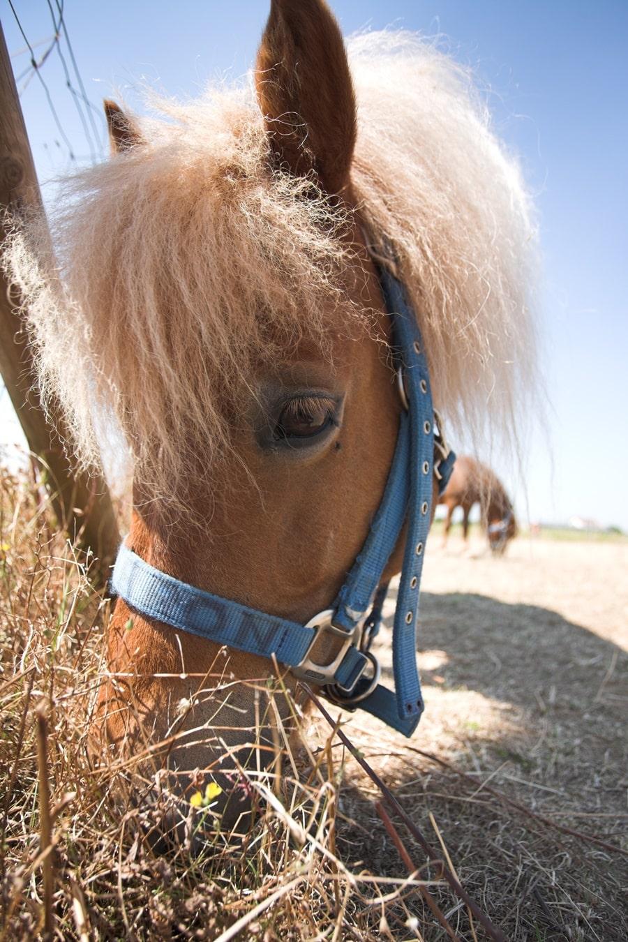 cheval-parc-lilas-animaponey-2