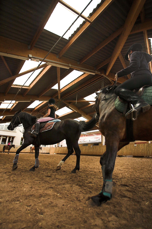 ecurie-conde-saint-maur-cheval